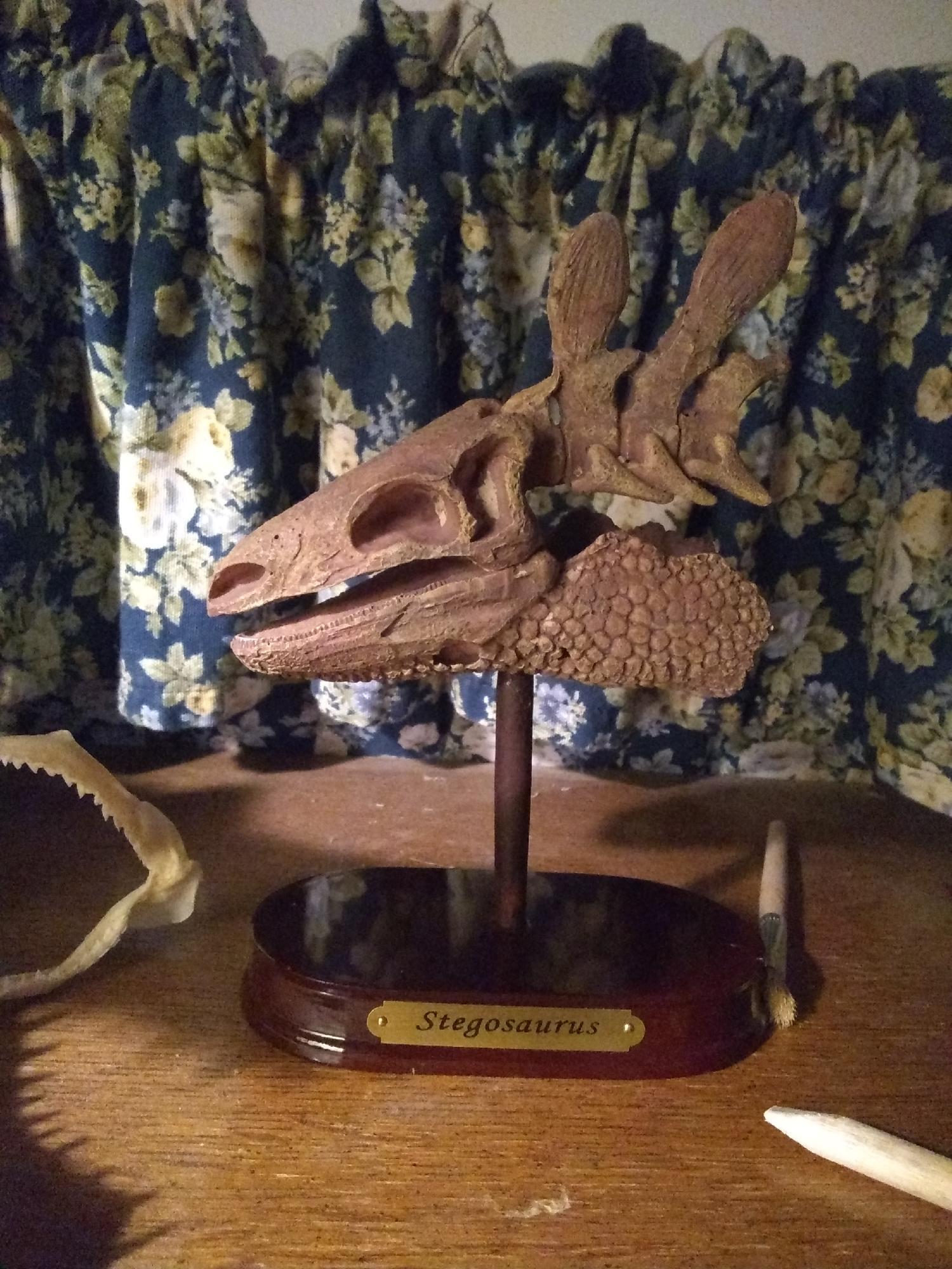 Stegosaurus skull