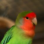 Pparika's avatar
