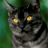 Частокол02's avatar