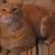 Kittymix92