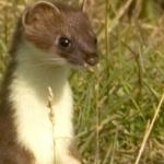 Weast Weasel's avatar