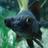 Чорний карась's avatar