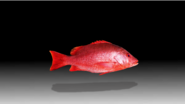 Red Snapper Promo
