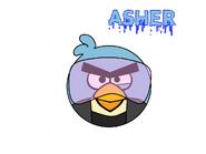 Asher Bird As Of 2011