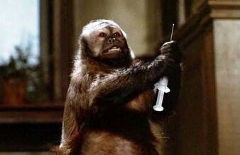 Ella (Monkey Shines).jpg