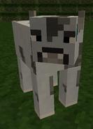 Anti-Cow
