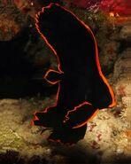 Juvenile-Pinnatus-Batfish