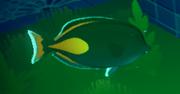 Achilles Surgeon Fish.png