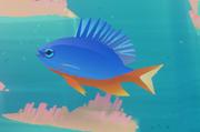 Azure Damselfish.png