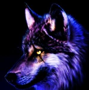 Luca Alpha Wolf's avatar