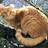 Lilishine's avatar
