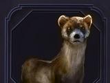 Familiar - Ferret