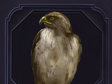 Familiar - Hawk