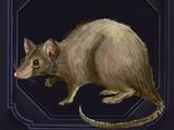 Familiar - Rat