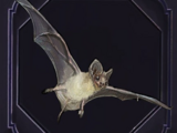 Familiar - Bat