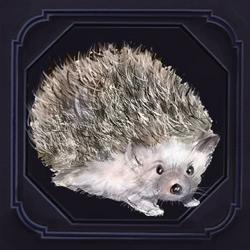 Hedgehog.png