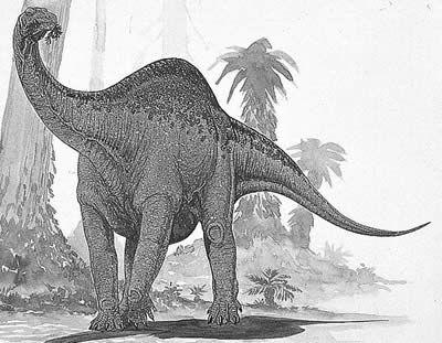 Melanorosaurus.jpg