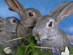 Fotos-conejos.jpg