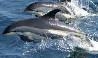 Delfines-fotos.jpg
