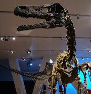 AustroraptorROM