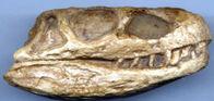 Euparkeria skull repro Tri.jpg