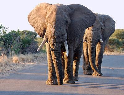 Elefante carretera.jpg