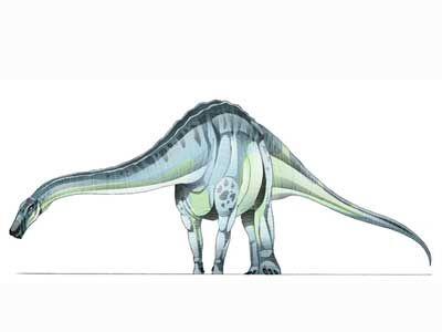 Quaesitosaurus-1.jpg