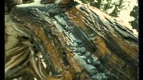 Caminando Entre Monstruos Vida Antes de los Dinosaurios (8)