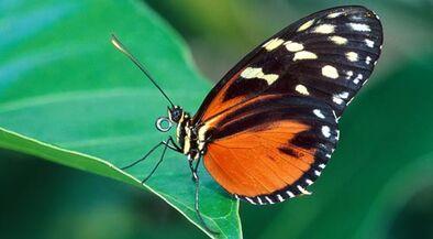 Fotos-mariposas-home-p.jpg