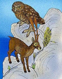 250px-Candiacervus ropalophorus.jpg