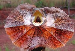 Clamidosaurio.jpg