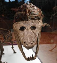 Mastodonsaurus giganteus.jpg