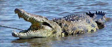 Fotos-cocodrilos-home-p.jpg