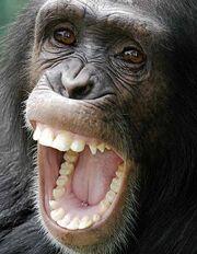 1610080120 chimpanzee.jpg