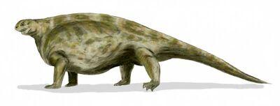 Cotylorhynchus.jpg