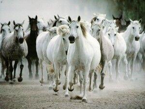 Tropilla-de-caballos-300x225.jpg