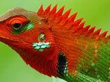 Lagarto verde común