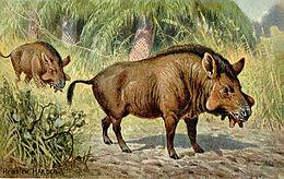 260px-Elotherium.jpg