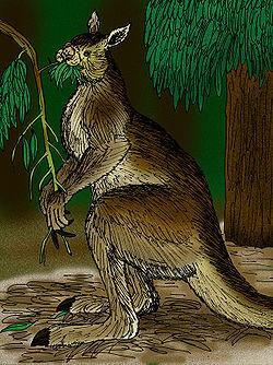 250px-Procoptodon goliah.jpg
