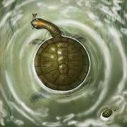 Tortuga fósil.jpg