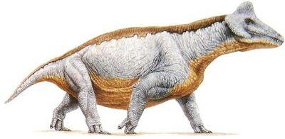 Styracocephalus.jpg