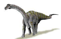 250px-Rapetosaurus BW.jpg