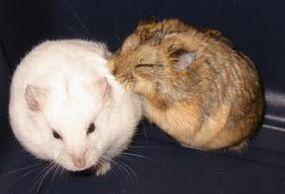 2-hamsters.jpg