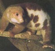 220px-Cuscus1