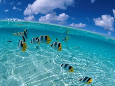 Peces tropicales.jpg