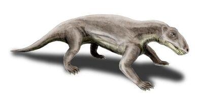 Biarmosuchus.jpg