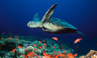 Sea-Turtle.jpg