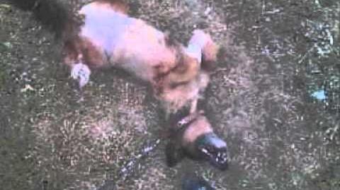 Spam (Sociedad Protectora de Animales de Mataró)