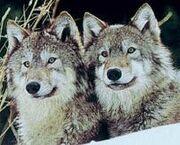 Lobos.jpg