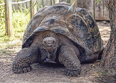 Islas-tortugas-galapagos2.jpg